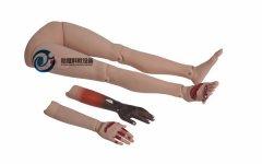 高级创伤四肢模型