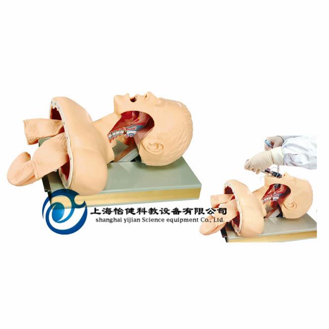 高级人体气管插管训练模型