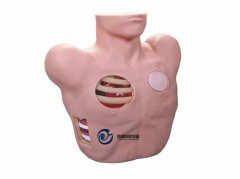胸腔穿刺引流模型