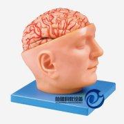 头部附脑和动脉万博manbet官方
