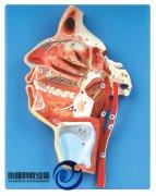 口、鼻、咽、喉内侧面血管神经万博manbet官方