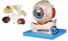 眼球构造放大万博manbet官方