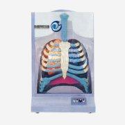电动人体呼吸系统模型