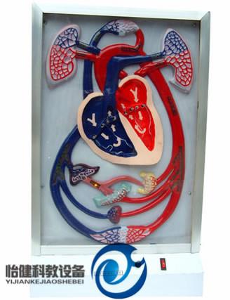 心脏搏动与血液循环电动万博manbet官方